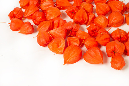 nightshade: Physalis faɪsəlɪs, sometimes faɪˈseɪlɪs, from physalis  bladder is a genus of flowering plants in the nightshade family Solanaceae