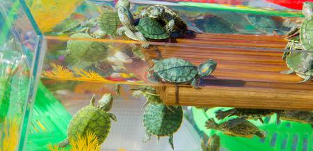 거북이 수족관, 작은 거북이는 애완 동물로 시장에서 판매되고 있습니다.