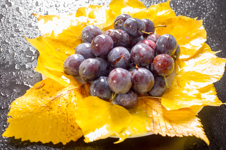 Plum on yellow autumn leaves. an oval fleshy fruit that is purple, reddish, or yellow when ripe and contains a flattish pointed pit. Stock Photo