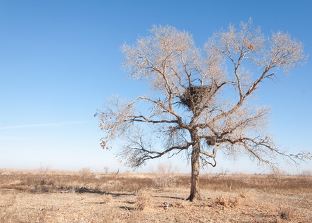 Steppe in the late autumn Stock Photo