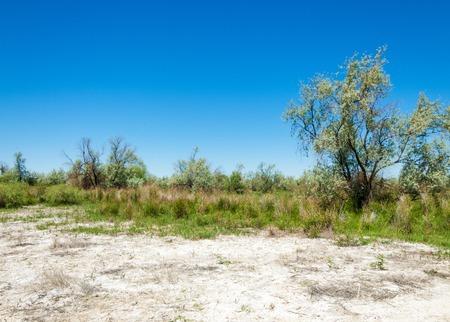 saline, salt-marsh. Etosha badlands. single shrub. containing or impregnated with salt. Kazakhstan Stock Photo
