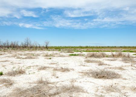 soil erosion: Steppe saline soils. saline  salt  in salt.  steppe  prairie  veldt veld. Saline soils of the desert, salt lakes,.  lifeless scorched earth. bare steppe of Kazakhstan
