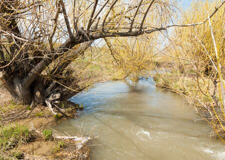 cascade: spring creek, on the shore of growing willow, Tien Shan foothills