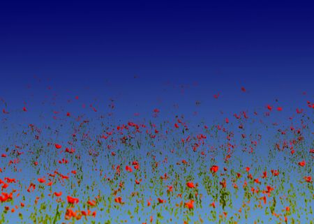Poppy flowers. processing method Rigid mixing blue gradient