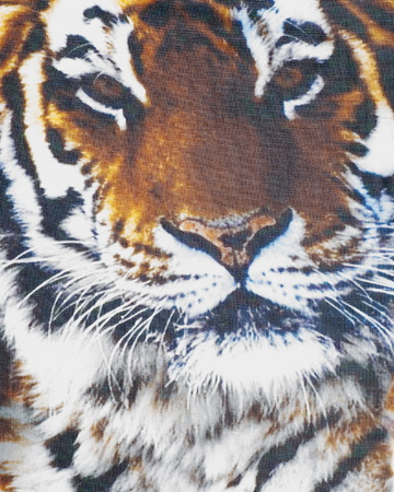 Silk fabric texture. Tiger .   Photography Studio Stock Photo