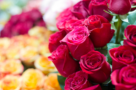Photo of a bouquet of roses. A prickly bush or shrub that typically bears red, pink, yellow, or white fragrant flowers, native to north temperate regions.