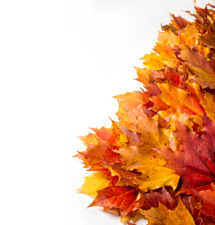 Autumn still life of maple leaves. Warm colors of Autumn. Green and Yellow Autumn Maple Leaf Stock Photo