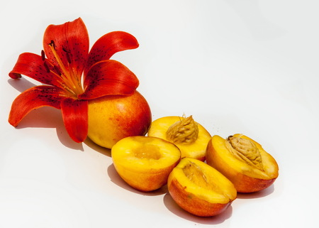 peaches. a round stone fruit with juicy yellow flesh and downy pinkish-yellow skin.  Peach. Fruit with slice isolated on white background.