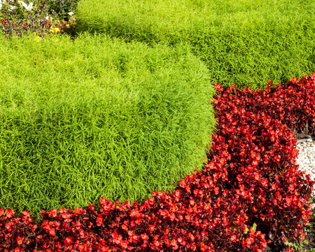 Texture, background. Landscape design in urban flower beds. Practical, aesthetic, gardening, as well as components of environmental sustainability including landscape design deserves.