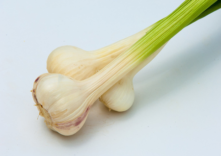 garlic isolated on white background. a strong-smelling pungent-tasting bulb, used as a flavoring in cooking and in herbal medicine.