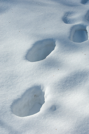 Texture, background, pattern. Footprints in the snow. The frost is very cold. White snow blanket on the ground. Atmospheric water vapor freezes in ice crystals and falls into light white flakes