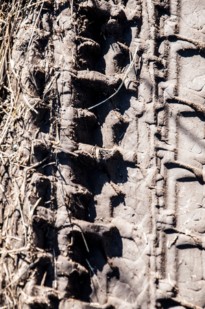 Picturesque dirt road. car track. Tread pattern from car tires Stock Photo