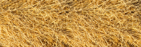 Texture, background. Straw from wheat beveled