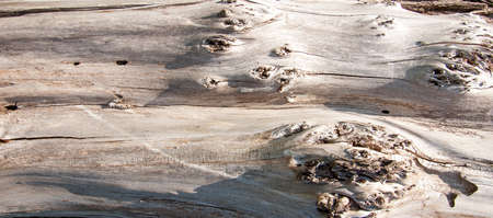 The texture of old wood background. closeup of old wood planks texture background Фото со стока