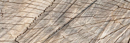 background, pattern. Stump. wooden textured texture. Cutting a cross-tree with annual rings. capable of cutting something.