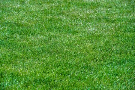 Urban photography, A lawn is an area of soil-covered land planted with grasses and other durable plants,