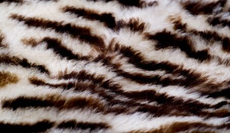 Texture, fur, Figure. Painted sheepskin under the leopard. a sheeps skin with the wool on. cover the surface of (something) with paint, as decoration or protection. Stock Photo