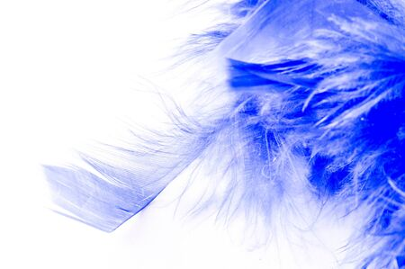 Texture, background, drawing. feather bird painted blue. A wonderful addition to any design or accessory, perfect for adding glam to the most basic fashion applications. 版權商用圖片