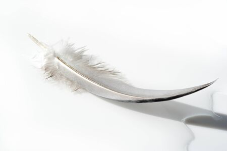 A birds feather  pen, feather, nib, plume, blade, style