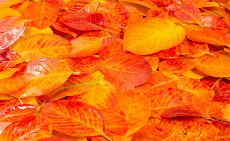 texture, background, pattern, autumn leaves, bright saturated colors, trees are amazingly beautiful in autumn, nature says goodbye to warm summer days Фото со стока