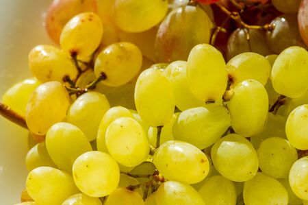 Grapes can be eaten fresh as table grapes or they can be used for making wine, jam, juice, jelly, grape seed extract, raisins, vinegar, and grape seed oil. Grapes are a non-climacteric type of fruit