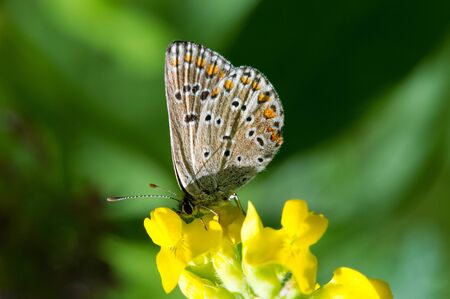 Butterflies ... these adorable creatures at all times inspired artists and poets. They fascinate with their beauty and ease.