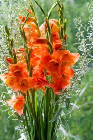 Gladiolus from Latin the diminutive of gladiu a sword is a genus of perennial cormous flowering plants in the iris family Iridaceae sword lily but is usually called by its generic name plural gladioli