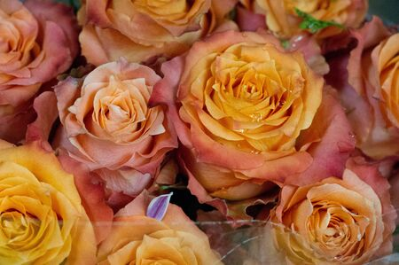 roses flowers. A plant with beautiful large fragrant flowers and a stalk, usually covered with spines. a prickly bush or shrub that usually carries red, pink, yellow or white fragrant flowers