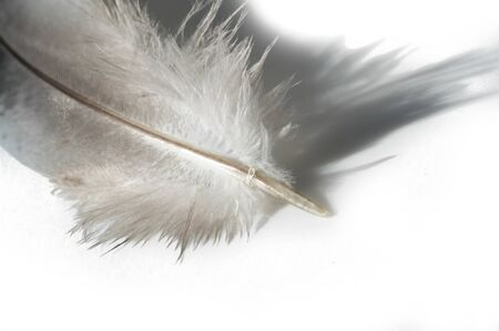 A bird's feather pen, feather, nib, plume, blade, style