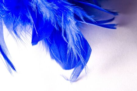 Texture, background, drawing. feather bird painted blue. A wonderful addition to any design or accessory, perfect for adding glam to the most basic fashion applications. 写真素材