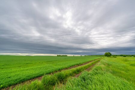 Spring photography, rural landscape, dirt road through young wheat fields, a wide way leading from one place to another, especially one with a specially prepared surface that vehicles can use Foto de archivo