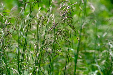 Texture, background, pattern, Shallow depth of field, grass in the meadow, vegetation consisting of typically short plants with long narrow leaves, wild or cultivated on lawns and pastures
