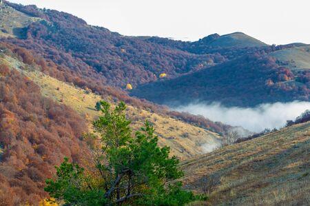 Autumn photos of the Crimean peninsula. High in the mountains above the clouds. Beech, pine, hornbeam, forest in the Demerdji mountains Reklamní fotografie