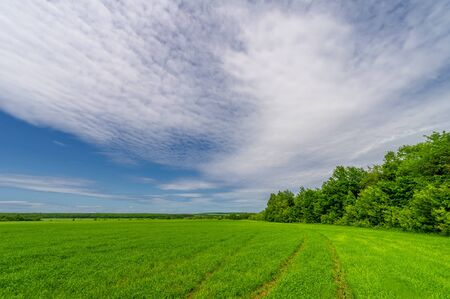 Spring photography, landscape with a cloudy sky. Young wheat with nitrogen and phosphate fertilizers, green sprouts, cereals, as well as cereals from which white flour is prepared