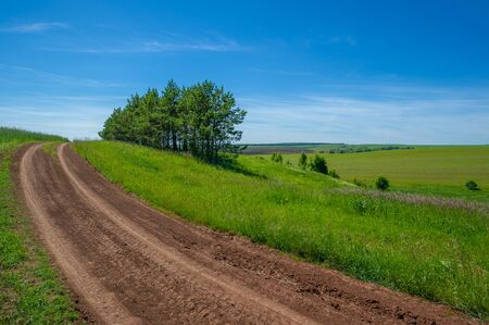 summer landscape, dirt road from black soil, blue cloudless sky, green wheat, a walk along the European part of the earth