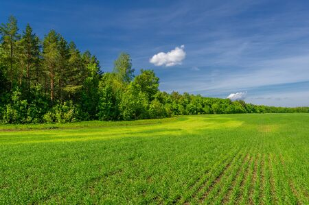Winter cereals, also called winter grains, fall cereals, fall grains, or autumn-sown grains, are biennial cereal crops sown in the autumn.