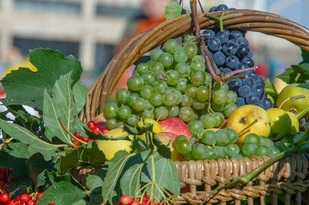 Fair farm gifts in all their splendor, watermelons, melons, pumpkins, grapes, apples, peppers, plums, raspberries, blackberries, eggplant and bright greens adorn the exhibition tables