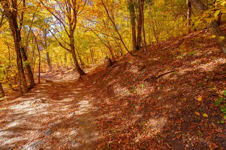 Photos of the Crimean peninsula in the fall, beech hornbeam forest. It grows at an altitude of 650-700 m, forests of rocky oak are replaced by beech and hornbeam. soil and water conservation Stock Photo