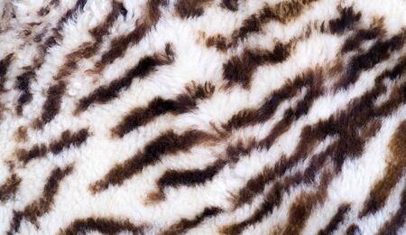Texture, fur, Figure. Painted sheepskin under the leopard. a sheeps skin with the wool on. cover the surface of (something) with paint, as decoration or protection. Stockfoto