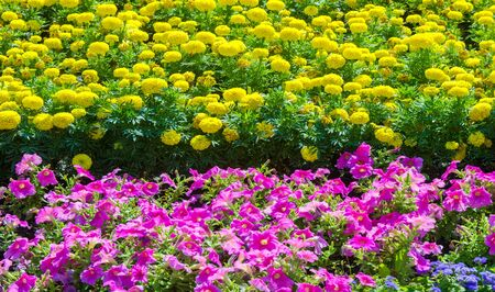 Floral landscaping brings a riot of color to city's streets, City beds with flowers, environmental responsibility and beautification through community participation and the challenge of competition.