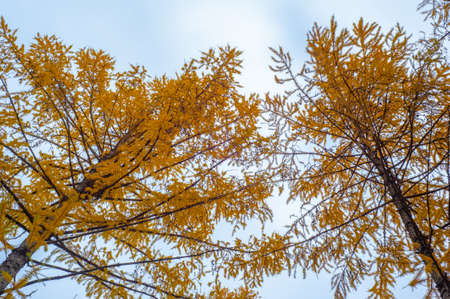 Autumn photography, leaves in the fall, At this time of the year the trees seem to come to life, breaking from orange, red and copper flowers