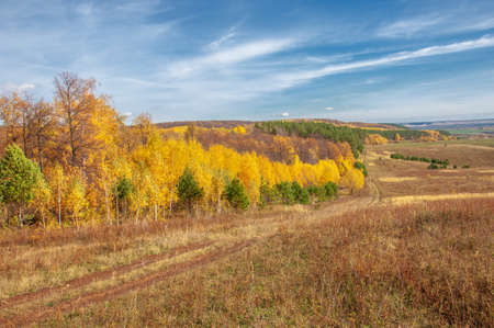 Autumn landscape photography, best photographer, mixed forests in autumn condition, colorful leaves, divided into burgundy, red, green, with patterned carpet