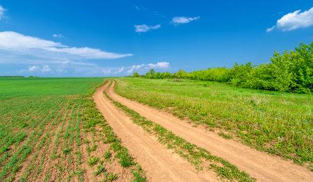 Spring photography, dirt road on wheat fields. lane intended for movement, communication Reklamní fotografie