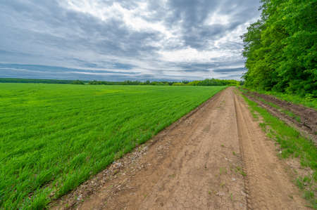 Spring photography, rural landscape, dirt road through young wheat fields, a wide way leading from one place to another, especially one with a specially prepared surface that vehicles can use Banque d'images