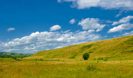 bright green grass with wild wildflowers, blue sky with white clouds