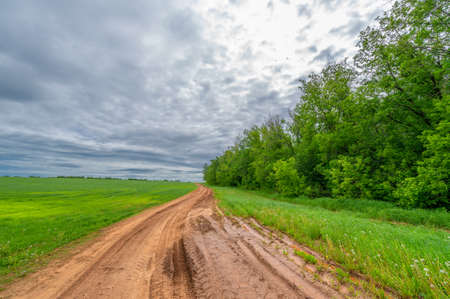 Spring photography, rural landscape, dirt road through young wheat fields, a wide way leading from one place to another, especially one with a specially prepared surface that vehicles can use