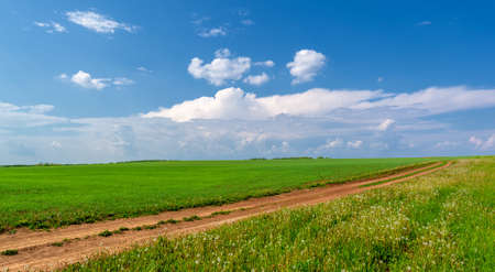 Spring photography, dirt road on wheat fields. Lane intended for movement.