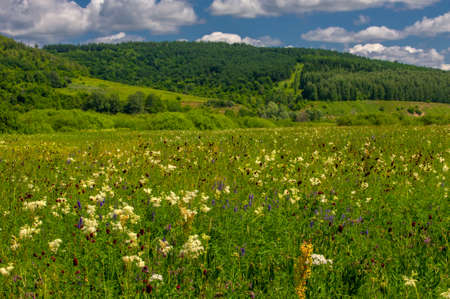 Summer photo. floodplain meadows A meadow (or floodplain) is an area of meadows or pastures on the banks of a river that is prone to seasonal flooding. Stock Photo