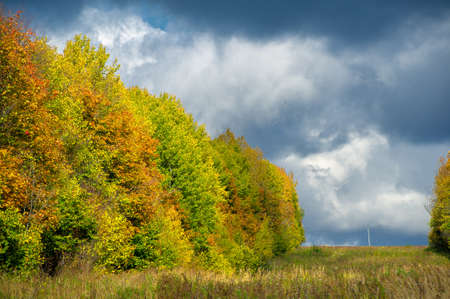 Autumn landscape photo. Flat flora of Europe. Meadows, ravines, thickets, open deciduous or mixed forest. Meadows in September