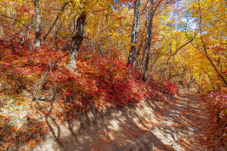 Photos of the Crimean peninsula in the fall, beech hornbeam forest. It grows at an altitude of 650-700 m, forests of rocky oak are replaced by beech and hornbeam.